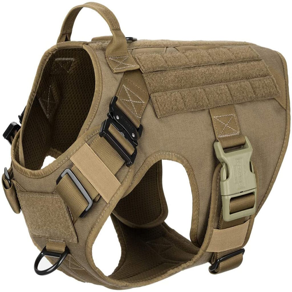 dog with tactical harness