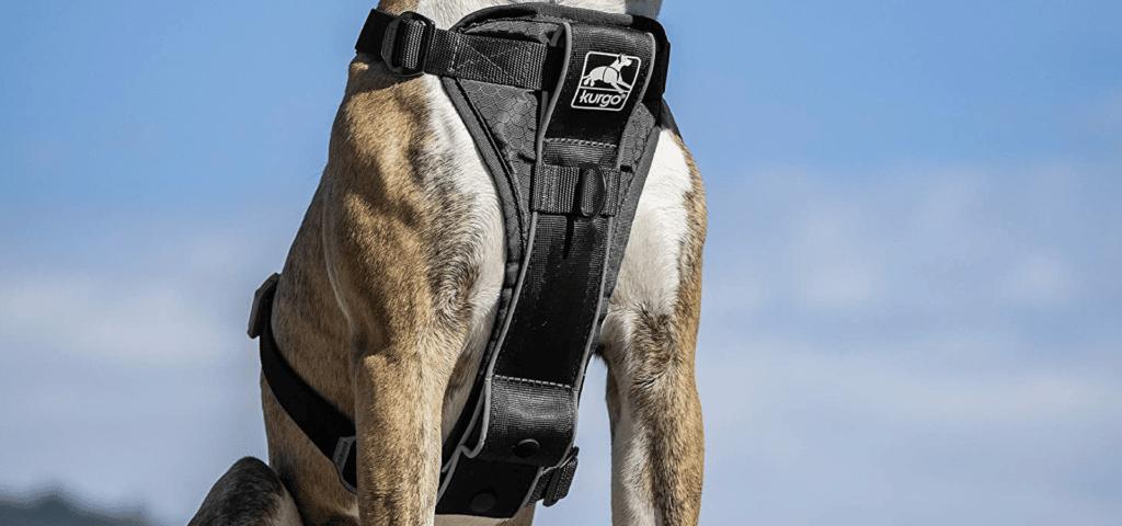kurgo-harness-blog