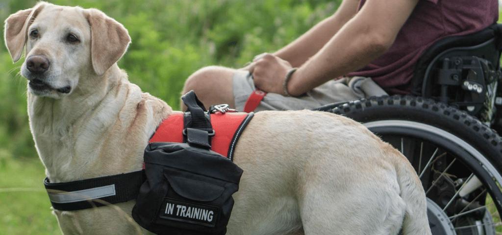 Service-dog-vest-blog
